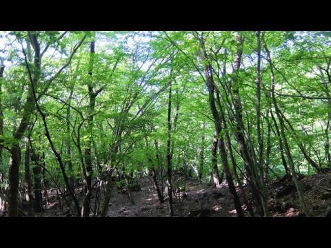 ドキュメンタリー - Documentary